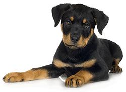 Dogwalkers Petsitters Puppy Sitters